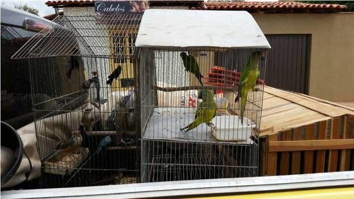 Aves apreendidas em Cabeceiras