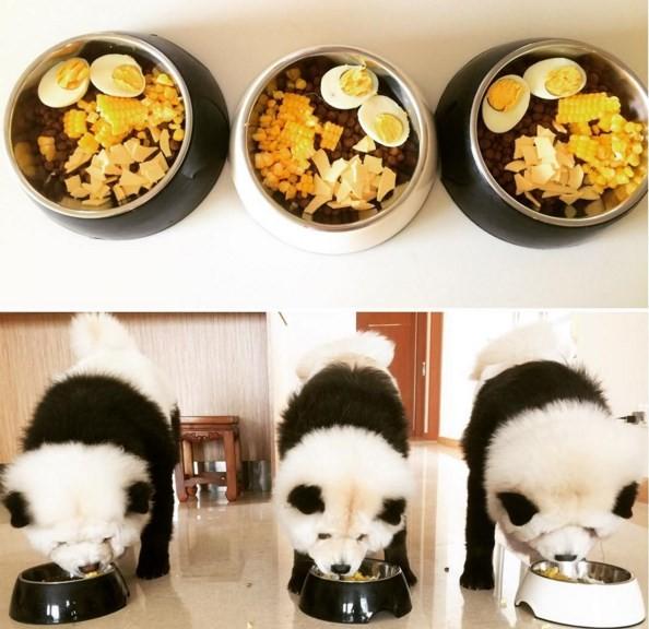"""Alimentação natural e equilibrada para os """"pandas"""" (Crédito: REPRODUÇÃO)"""