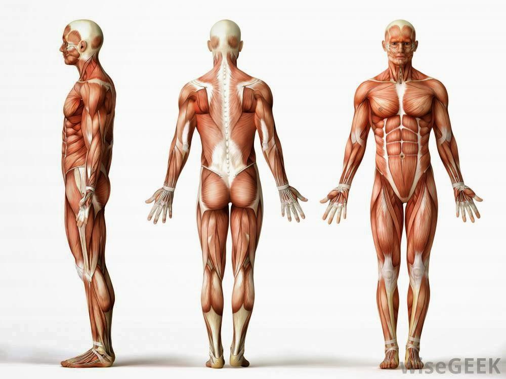 Baud de cinto de cinto de respostas de perda de peso