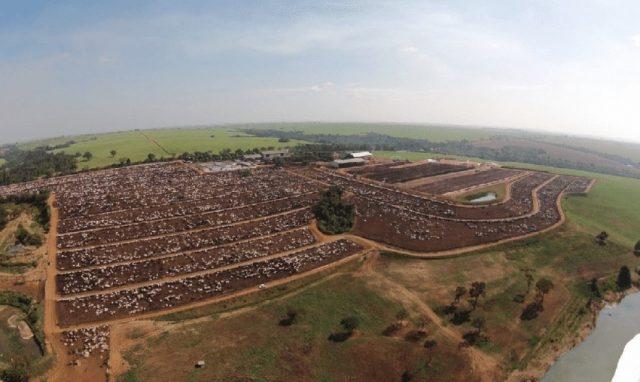 Cidade do boi: Conheça a fazenda com 60 mil gados que fornece animais à JBS - imagem 45403